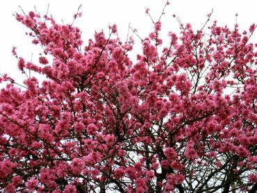 桜もいいけど